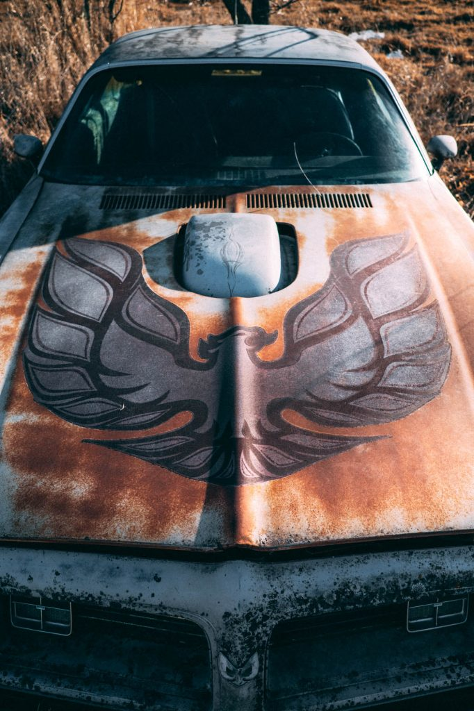 An old Trans Am abandoned in a field in Iowa - detail of the hood decal.